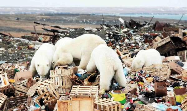 загрязненность отдельных регионов Арктики сегодня выше, чем в зоне Чернобыля